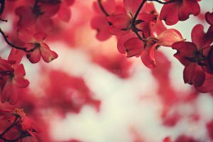 Spring in Confidence: A Dogwood Flower Story